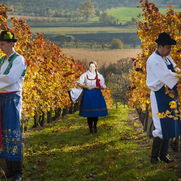 Kolo & Víno & Folklor